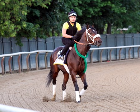 Bravazo on the track at Belmont Park on June 8, 2018