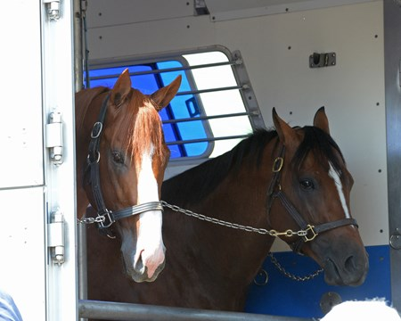 Justify, left, leaves for California via Brook Ledge and H. E. Tex Sutton June 17, 2018 Churchill in Louisville, Kentucky.