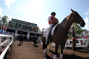 California Chrome Will Shuttle To Chile Bloodhorse