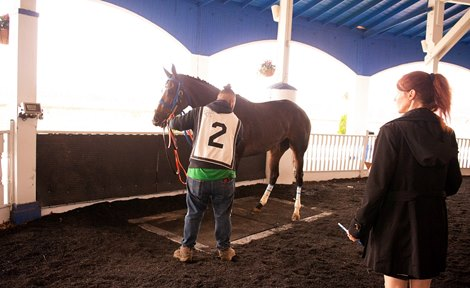 Stronach Group Equibase Pounding Out Horse Weight Plan
