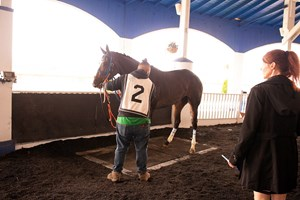 Justify Still Taking It Easy At Santa Anita Bloodhorse