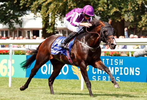 U S Navy Flag Eyes The Everest After July Cup Triumph