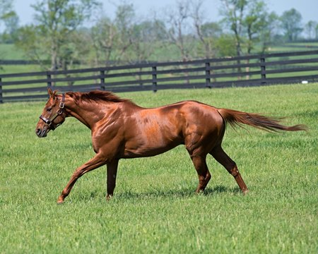 Gun Runner at Three Chimneys Farm