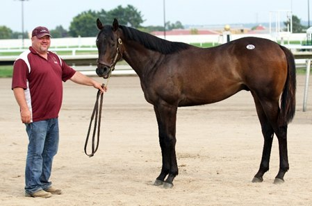 Discreet Cat Gelding Tops Minnesota Yearling Sale - BloodHorse