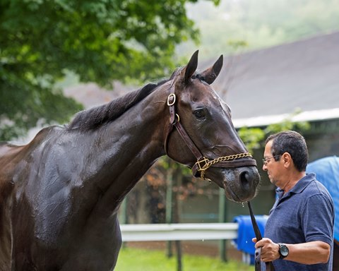 Arrogate Half Sister Osare Retired