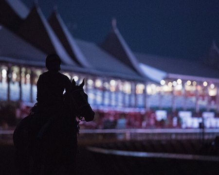 A horse trains at Saratoga Race Course in upstate New York