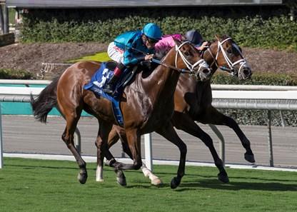 Conquest Tsunami Horse Profile Bloodhorse