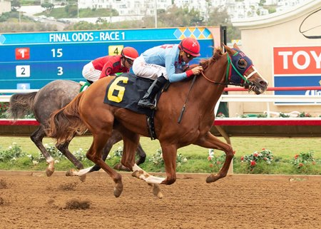 capital account gets first winner in feeling strong bloodhorse