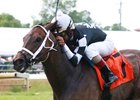 Mr. Misunderstood will try Aug. 4 to win the Kentucky Downs Preview Tourist Mile a second year in a row