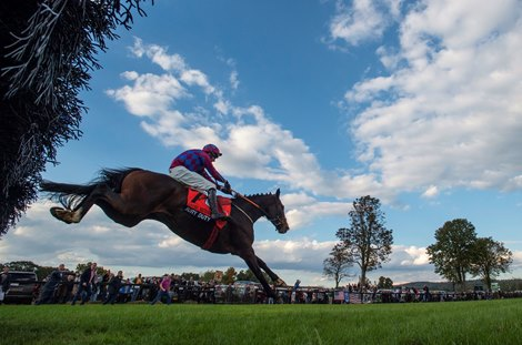 Jury Duty Survives Inquiry to Win Grand National