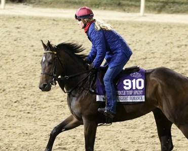 Moonlight Romance Horse Profile Bloodhorse