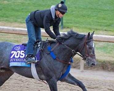 Gunmetal Gray Horse Profile Bloodhorse