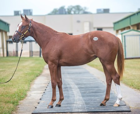 A filly by He's Had Enough consigned as Hip 332 to the OBS October Yearlings Sale is a half sister to Point Given
