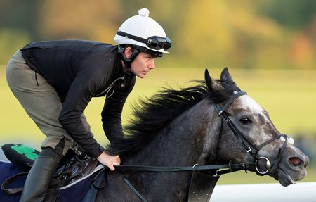 Roaring Lion trains at Warren Hill in Newmarket