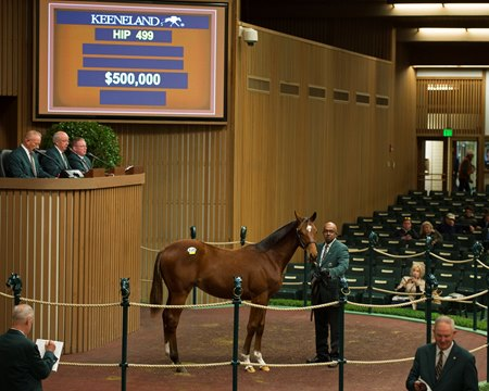Keeneland September Pinhook Prospects Topped By Colts