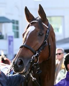 Enable Gb Horse Profile Bloodhorse