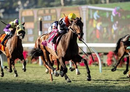 Chicago Style Horse Profile Bloodhorse