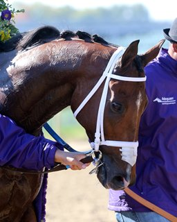 bloodhorse thoroughbred horse racing breeding and sales news