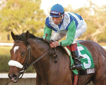 Backtrack Barbaro Opens 3 Year Old Season In Style Bloodhorse