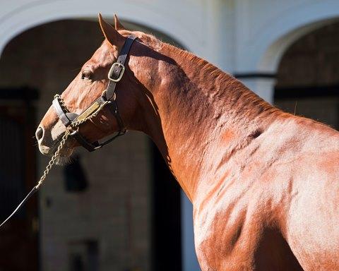 Danza and Dynamic Racer Join Ohio Stallion Ranks