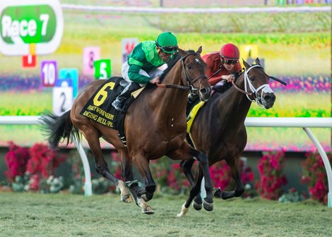Raging Bull Just Gets Up To Take Hollywood Derby Bloodhorse