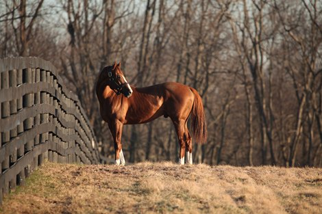 Open Houses Set for California Chrome, Daddy Long Legs
