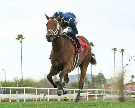 Mccarthy Fuentes Eclipse Sweep Turf Paradise Stakes