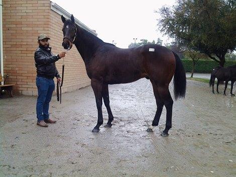 Merit Man Colt Tops Ctba January Mixed Sale Bloodhorse