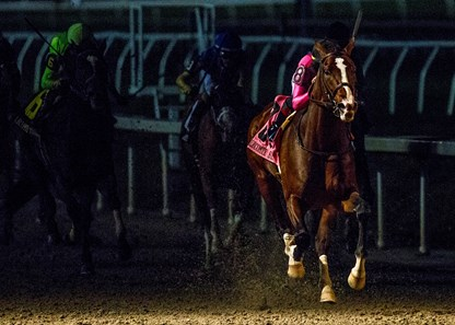 War Of Will Horse Profile Bloodhorse