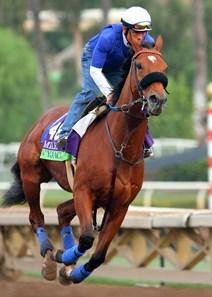 Vyjack Horse Profile Bloodhorse