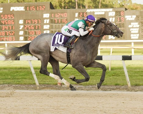 Tacitus Somelikeithotbrown Extend Tapit S Legacy Bloodhorse