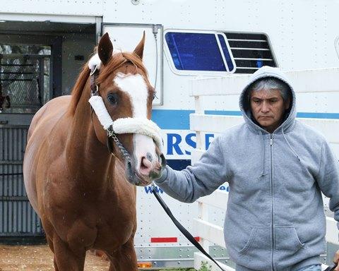 Horses On Flipboard Lifestyle Uk Sport Horses Animals