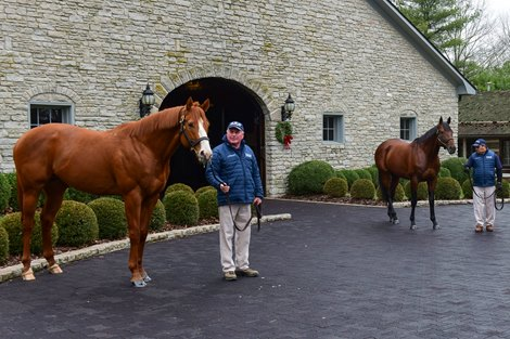 Justify to Shuttle from Ashford Stud to Australia