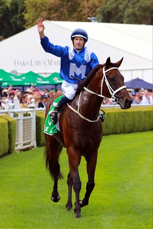 Winx Sets World Record With 23rd Group 1 Victory Bloodhorse