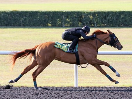 A Super Saver filly consigned as Hip 305 by Woodford Thoroughbreds gets the fastest quarter-mile time at OBS