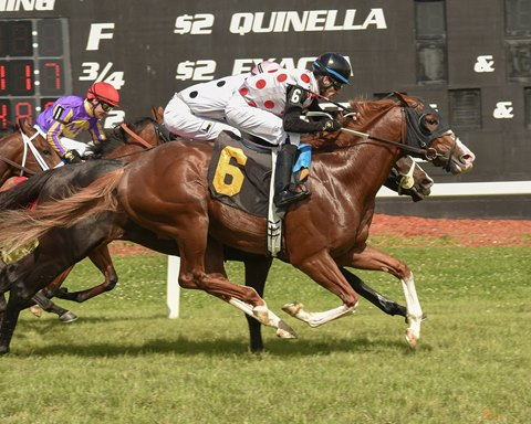 Good Governance to Make Stakes Debut in Saranac