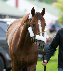 Image result for spinoff horse