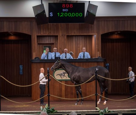 Liam's Map Colt Electrifies Third Session at OBS - BloodHorse