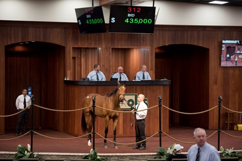 Paynter Filly Sparks Early Bidding War at OBS Sale
