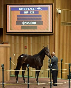 The Competitive Edge filly consigned as Hip 129 in the ring at the Keeneland April Sale