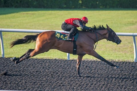 Seven-Figure Filly Fuels Strong OBS Second Session