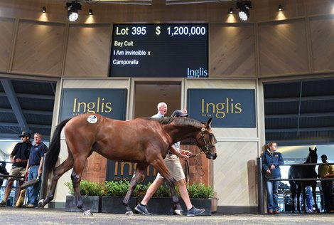Australian Stallion Fees Could See Significant Rise