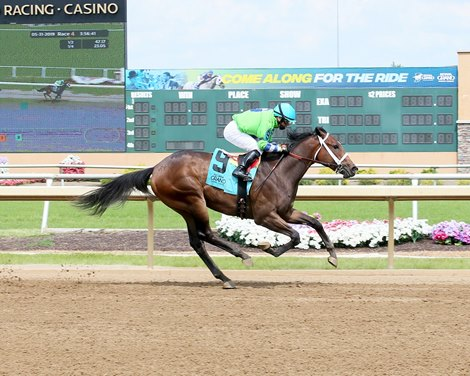 Two Last Words The First Winner For Commissioner Bloodhorse