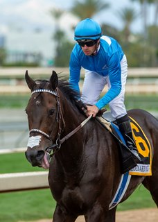Bolo Aims to Tie Together Wins in Del Mar Mile