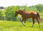 Monomoy Girl walks a pasture at WinStar Farm near Versailles, Ky. in May