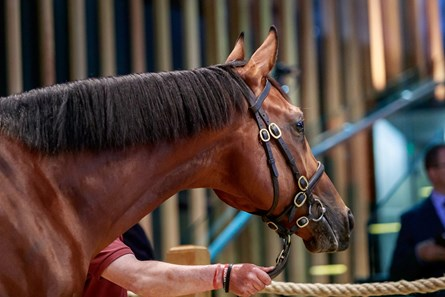 American Pharoah Horse Profile Bloodhorse