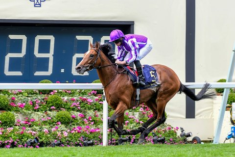 Japan Gives Aidan O'Brien a 70th Royal Winner