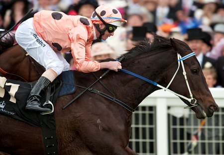 Australian Entries to Royal Ascot in Decline - BloodHorse