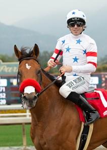 Lady Prancealot Ire Horse Profile Bloodhorse