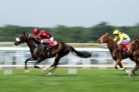 Kameko Shows Immense Promise for Qatar Racing - BloodHorse